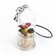Каменная роза (ден. дерев Minicactus брелок с живым растением фото