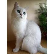 Ветеринарные препараты для кошек фото