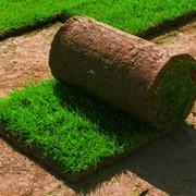 Садово-парковый газон, газон в Молдове фото