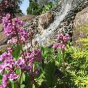 Посадка деревьев, кустарников, вьющихся растений фото