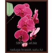 Картина стразами Орхидея - 40х50см фото