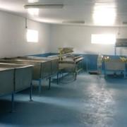 Выращивание осетровых пород рыб в установках замкнутого водоснабжения (УЗВ) фото