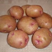 Сортовой картофель фото