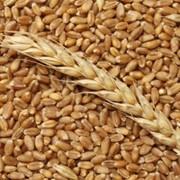 Оказываем услуги по отгрузки зерновых и масличных железнодорожным и автомобильным транспортом фото