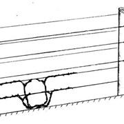 Веревка для шпалеры в садоводстве и виноградарстве фото