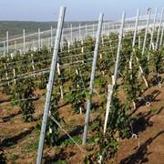Шпалерный столб для винограда концевой 60х40х2,0 мм фото