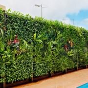 Вертикальное озеленение на даче Черновцы фото