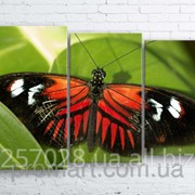 Модульна картина на полотні Метелик код КМ100160-003 фото
