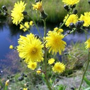 Защита садовых растений фото