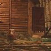 Банный клуб, абонементная система посещения: 2 часа, Одесса фото