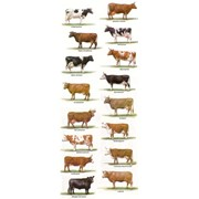 Консультация по приобретению или продаже скота фото