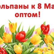 Тюльпаны к 8 Марта (GreenTerra) фото