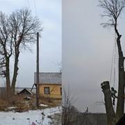 Спилить дерево любой сложности фото