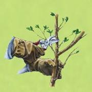 Формирование крон деревьев, стрижка, обрезание деревьев и кустарников, санитарная обрезка кустарников, деревьев фото
