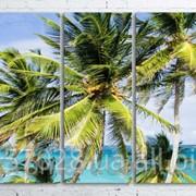Модульна картина на полотні Пальми на пляжі код КМ100200(200)-025 фото