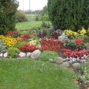 Многолетние цветочно-декоративные растения фото