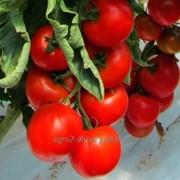 Семена томата Альтамира F1 / Altamira F1 фото