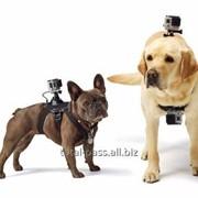 Крепление GoPro на Собаку фото