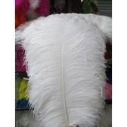 Перо Люкс страусиное. Цвет белый. Размер 60-65cм. (1шт.) ПС65-01 фото