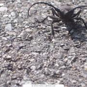Экзотические насекомые фото