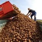 Экспорт сельскохозяйственных продуктов фото