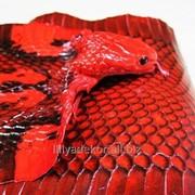 Кобра шкура натуральная красная фото
