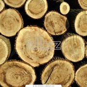 Лесозаготовка фото