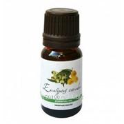 Эфирное масло Эвкалипт лимонный, 5 мл фото