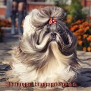 Груминг собак фото