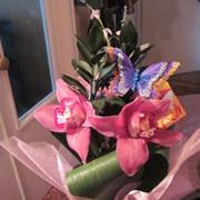 Архидея фото