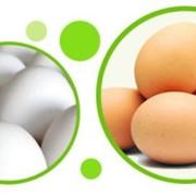 Яйцо куриное С1, С2, С0 фото