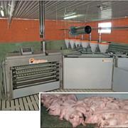 Весы для взвешивания свиней. Автоматические сортировочные весы TriSort производства компании Big Dutchman. фото