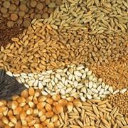 Семена на продажу фото