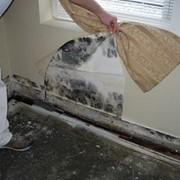 Удаление грибка, плесени со стен. фото