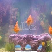 Изготовление аквариумов, морской аквариум фото