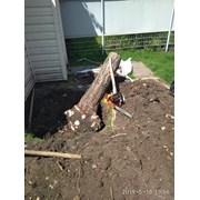 Корчевание и удаление пней спил деревьев. фото