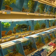 Животные для аквариумов в Алматы фото