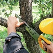 Удаление деревьев в алматы фото