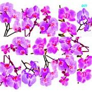 "Dona Jerdona слайдер дизайн ""Орхидеи на белом фоне"" 469 фото"