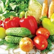 Овощи в ассортименте. фото
