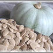 Экстракт семян тыквы фото