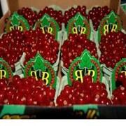 Смородина красная, импортная продукция ОПТОМ фото