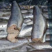 Рыба Аргентина фото