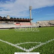 Спортивный газон фото