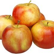 Яблоки оптом на экспорт из Казахстана фото