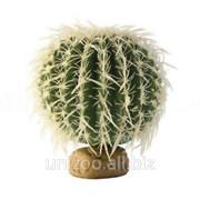 Террариумное растение Hagen Кактус Exo Terra Barrel Cactus (Small) фото
