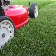 Скошування газонів, засадження трави. фото