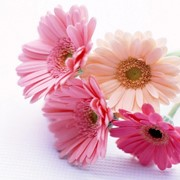 Доставка букетов, цветов, композиций фото