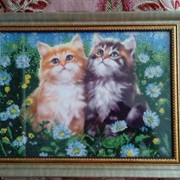 «Коти на поляні» фото