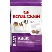 Giant Adult Pro Royal Canin корм для щенков, От 18 до 24 месяцев, Пакет, 15,0кг фото